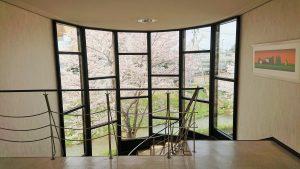 階段ホールからの桜